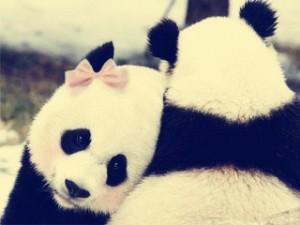 -love-panda-smile-Favim.com-2062714